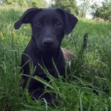 kutya-menhely-gazdit-keres-hajdú-bihar-hajdúszoboszló-kutya-orokbefogadas-carmen-5