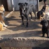 kutyamenhely-allatmenhely-kutya-orokbefogadas-hajduszboszlo-1