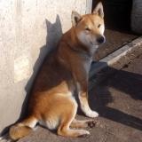 kutyamenhely-allatmenhely-kutya-orokbefogadas-hajduszboszlo-15