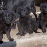 kutyamenhely-allatmenhely-kutya-orokbefogadas-hajduszboszlo-19