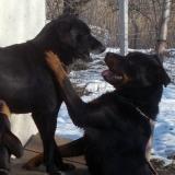 kutyamenhely-allatmenhely-kutya-orokbefogadas-hajduszboszlo-20