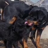 kutyamenhely-allatmenhely-kutya-orokbefogadas-hajduszboszlo-21