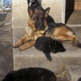 kutyamenhely-allatmenhely-kutya-orokbefogadas-hajduszboszlo-24