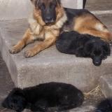 kutyamenhely-allatmenhely-kutya-orokbefogadas-hajduszboszlo-26