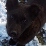 kutyamenhely-allatmenhely-kutya-orokbefogadas-hajduszboszlo-27