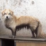 kutyamenhely-allatmenhely-kutya-orokbefogadas-hajduszboszlo-31
