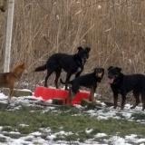 kutyamenhely-allatmenhely-kutya-orokbefogadas-hajduszboszlo-32