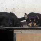 kutyamenhely-allatmenhely-kutya-orokbefogadas-hajduszboszlo-42