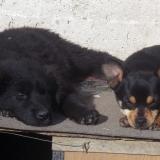 kutyamenhely-allatmenhely-kutya-orokbefogadas-hajduszboszlo-43