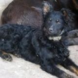 menhely-kutya-orokbefogadas-hajduszoszlo-2018-marcius-100