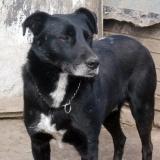 menhely-kutya-orokbefogadas-hajduszoszlo-2018-marcius-108
