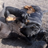 menhely-kutya-orokbefogadas-hajduszoszlo-2018-marcius-113
