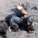 menhely-kutya-orokbefogadas-hajduszoszlo-2018-marcius-115