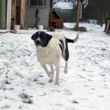 menhely-kutya-orokbefogadas-hajduszoszlo-2018-marcius-18
