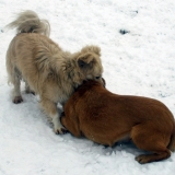 menhely-kutya-orokbefogadas-hajduszoszlo-2018-marcius-2