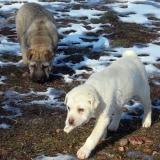 menhely-kutya-orokbefogadas-hajduszoszlo-2018-marcius-22