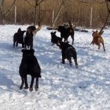 menhely-kutya-orokbefogadas-hajduszoszlo-2018-marcius-24