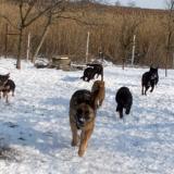 menhely-kutya-orokbefogadas-hajduszoszlo-2018-marcius-26