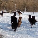 menhely-kutya-orokbefogadas-hajduszoszlo-2018-marcius-27