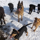 menhely-kutya-orokbefogadas-hajduszoszlo-2018-marcius-30