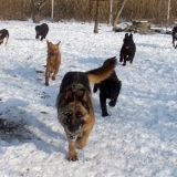 menhely-kutya-orokbefogadas-hajduszoszlo-2018-marcius-32