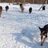 menhely-kutya-orokbefogadas-hajduszoszlo-2018-marcius-33