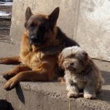 menhely-kutya-orokbefogadas-hajduszoszlo-2018-marcius-41