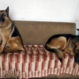 menhely-kutya-orokbefogadas-hajduszoszlo-2018-marcius-49