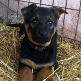 menhely-kutya-orokbefogadas-hajduszoszlo-2018-marcius-56