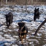 menhely-kutya-orokbefogadas-hajduszoszlo-2018-marcius-64