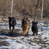 menhely-kutya-orokbefogadas-hajduszoszlo-2018-marcius-66