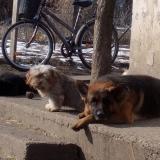menhely-kutya-orokbefogadas-hajduszoszlo-2018-marcius-71