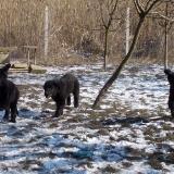 menhely-kutya-orokbefogadas-hajduszoszlo-2018-marcius-72