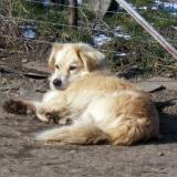 menhely-kutya-orokbefogadas-hajduszoszlo-2018-marcius-74