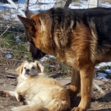 menhely-kutya-orokbefogadas-hajduszoszlo-2018-marcius-75