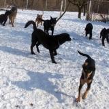 menhely-kutya-orokbefogadas-hajduszoszlo-2018-marcius-79