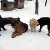 menhely-kutya-orokbefogadas-hajduszoszlo-2018-marcius-8
