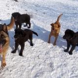 menhely-kutya-orokbefogadas-hajduszoszlo-2018-marcius-80