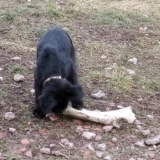 menhely-kutya-orokbefogadas-hajduszoszlo-2018-marcius-84