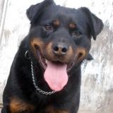 menhely-kutya-orokbefogadas-hajduszoszlo-2018-marcius-94