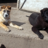 menhely-kutya-orokbefogadas-hajduszoszlo-2018-marcius-96