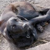orokbefogadhato-kutyak-hajduszoboszlo-11