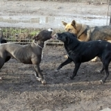 orokbefogadhato-kutyak-hajduszoboszlo-13