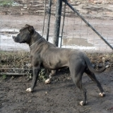 orokbefogadhato-kutyak-hajduszoboszlo-16