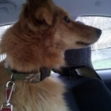 orokbefogadhato-kutyak-hajduszoboszlo-2