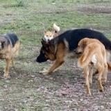 orokbefogadhato-kutyak-hajduszoboszlo-21