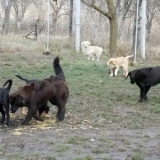 orokbefogadhato-kutyak-hajduszoboszlo-31