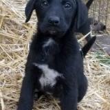 orokbefogadhato-kutyak-hajduszoboszlo-32