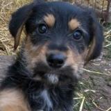 orokbefogadhato-kutyak-hajduszoboszlo-36