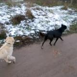 orokbefogadhato-kutyak-hajduszoboszlo-6
